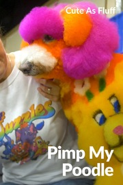 Cute as Fluff - S01:E03 - Pimp my Poodle