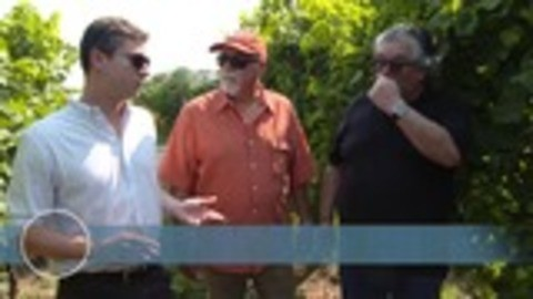 The Wine Guys - S01:E06 - Factories and Families